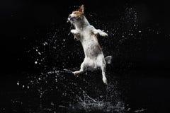 собака предпосылки черная Стоковое Фото