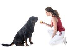 Собака, предприниматель и повиновение стоковые фото