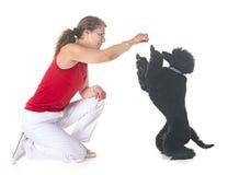 Собака, предприниматель и повиновение стоковое фото