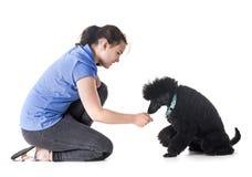 Собака, предприниматель и повиновение стоковые фотографии rf