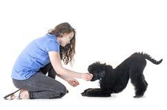 Собака, предприниматель и повиновение стоковое изображение rf
