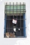 Собака предохранителя уснувшая Стоковая Фотография RF