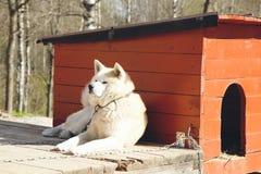 Собака предохранителя Стоковая Фотография