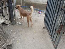 Собака предохранителя стоковое изображение