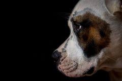 собака предпосылки черная Стоковые Изображения