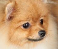 собака предпосылки черная Стоковая Фотография