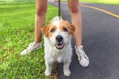 Собака представляя на камере с ногами женщины Стоковые Фото