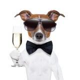 Собака приветственных восклицаний Стоковое Изображение RF