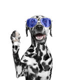 Собака приветствует вас Стоковая Фотография RF