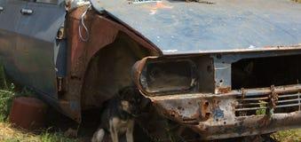 Собака прикованная к автомобилю Стоковые Фото