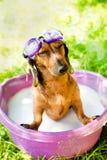 Собака принимает ванну лета стоковое изображение rf