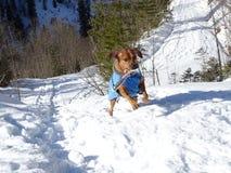 Собака приносит газету Стоковая Фотография RF