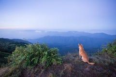 Собака природы Стоковое Изображение RF
