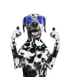 Собака при стекла показывая большой палец руки вверх и гостеприимсва Изолят на белизне стоковое фото rf