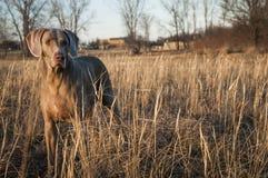 Собака птицы Стоковое Фото