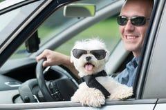 Собака путешествуя в автомобиле Стоковое фото RF