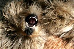 собака пушистая Стоковая Фотография