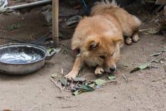 собака пушистая Стоковая Фотография RF