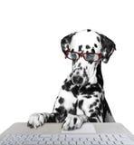 Собака работая на компьютере Стоковое Изображение