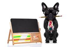 Собака работника офиса Стоковое Изображение