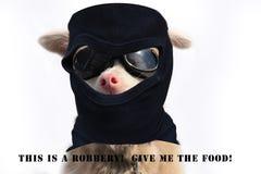 Собака разбойника стоковые фото
