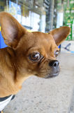 Собака рамки Стоковое фото RF