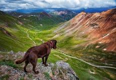 Собака рассматривая гора Колорадо Стоковые Изображения