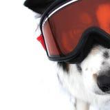 собака резвится xtreme зимы Стоковое Изображение