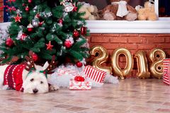 Собака рождества как символ Нового Года Стоковое Фото