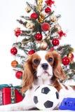 Собака рождества празднует рождество с деревом на студии Безделушка рождества орнаментирует стеклянные шарики и кавалерийский кор стоковые фотографии rf