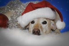 собака рождества Стоковые Фотографии RF
