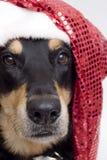 собака рождества Стоковая Фотография RF
