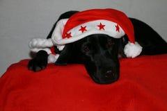 Собака рождества в студии стоковые фотографии rf