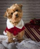 Собака рождества с настоящим моментом Стоковое Изображение RF