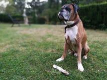 собака самолюбивая Стоковая Фотография