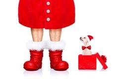 Собака Санта Клауса рождества Стоковые Фотографии RF