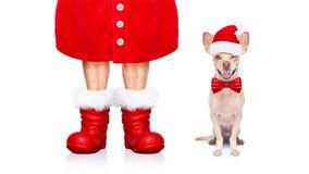 Собака Санта Клауса рождества стоковая фотография rf