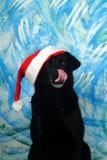 Собака Санта Клауса Стоковое фото RF