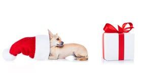 Собака Санты рождества Стоковые Фото