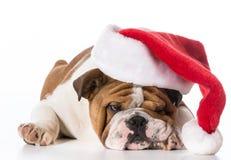 Собака Санты стоковое изображение