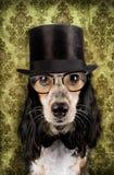 Собака сбора винограда Стоковая Фотография