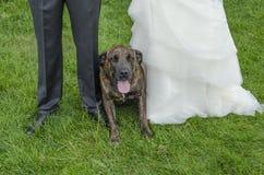 Собака свадьбы Стоковое фото RF
