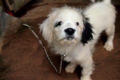 Собака сережки Стоковые Фото