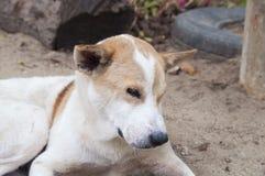 Собака селективного фокуса милая Стоковые Изображения RF