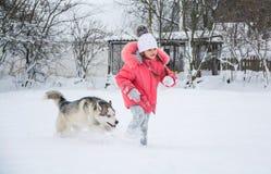 Собака сибирской лайки бежит через снег стоковое фото rf