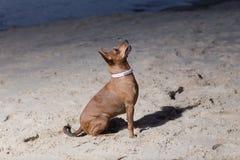 Собака сидит на Балтийском море Вода и волны Природа и животное Стоковое Изображение