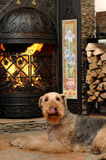 собака сидит Стоковые Фотографии RF