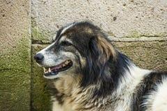 Собака сидя на краю стены стоковое изображение rf