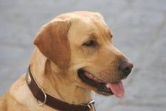 собака симпатичная Стоковая Фотография