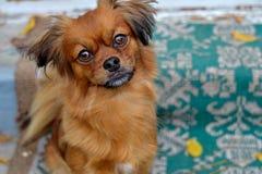 собака симпатичная Стоковые Изображения RF